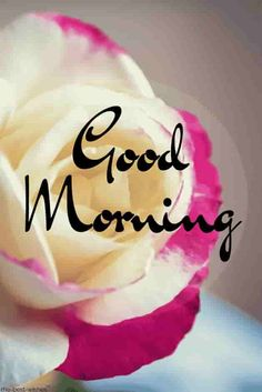 Looking for best Good Morning Wishes and Images with Rose? Check out our collection of beautiful HD Images, Pictures and Pics to send to your loved ones and spread a smile on their faces. Good Morning Beautiful Gif, Good Night I Love You, Good Morning Roses, Cute Good Morning, Happy Morning, Good Night Sweet Dreams, Good Morning Picture, Morning Pictures, Morning Msg