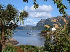 Plockton Scotland--These are not actually palm trees but a native New Zealand tree called the Cabbage Tree.