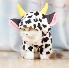 Who wants their own little cow running around the house? Well now you can with this adorable costume. Perfect for Cats 🐱 or Dogs 🐶, for Halloween 🎃 or just for fun. We have the best quality pet costumes so rest assured you won't be disappointed with your purchase. The costume is made from with a warm cotton material so not only being a fun costume it will also keep your pet warm as we get into winter #halloween #petcostume #dogcostume #catcostume #petsupplies #funnypets Cow Cat, Cat Dog, Funny Costumes, Pet Costumes, Small Kittens, Cats And Kittens, Siamese Cats, Cats Bus, Small Cat