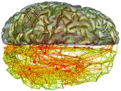 """The Unlikely #Network at the Core of Your #Brain. """"In the brain, the rich club is similar to the highway system, which accounts for only a small percentage of surface roads but a much larger percentage of all travel. The neural rich club makes up """"a small piece of the overall wiring length of the brain, but it carries a massive amount of information flow,"""" van den Heuvel said."""" Wired Science"""