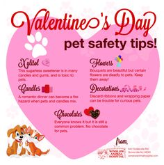 Valentine's Day Pet Safety Tips