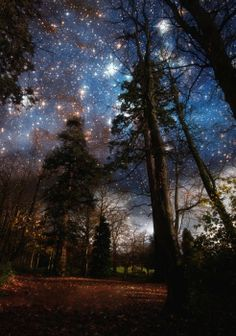 How beautiful is this reminds me of Australia and the Southern Cross