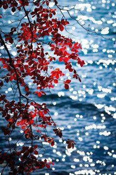 Photograph Twinkling Autumn Lake Chuzenji Japan by C. Padilla on 500px
