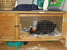 Hutch - type of cage used typically for housing domestic rabbits. Reptile Zoo, Reptile Cage, Reptile Enclosure, Guinea Pig Toys, Guinea Pig Care, Guinea Pigs, Small Horse Barns, Bunny Cages, Rabbit Hutches