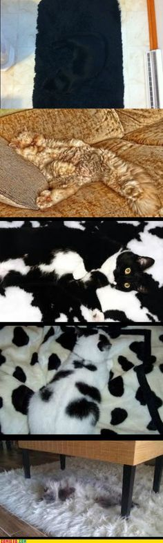 Camouflage, Level Cat The top one is exactly what my cat looks like on my kitchen floor mat