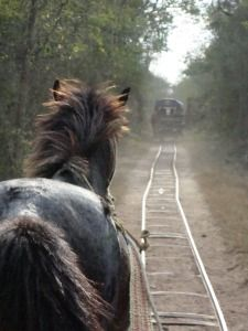 Paseando en un truck en Cuzamá, rumbo a un cenote