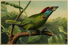 Source: biodiversitylibrary.org