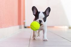 Photographing Puppies at Play