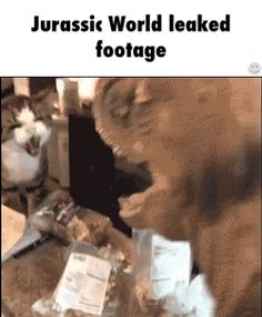 New GIF tagged via Giphy http://ift.tt/29d57YM