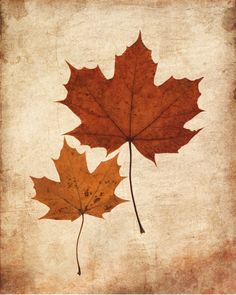 New Bathroom Art Diy Canvas Leaves Ideas Fall Leaves Tattoo, Autumn Leaves, Maple Leaves, Autumn Fall, Fall Clip Art, Autumn Illustration, Beautiful Flowers Wallpapers, Abstract Nature, Autumn Photography