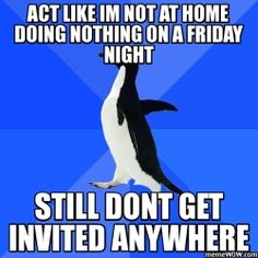 more socially awkward penguin