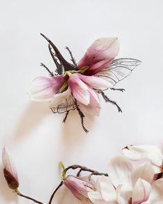 Mixed Art - This artist uses real flowers combined with a drawing to create this art. Magnolia bug no. 4333. $30.00
