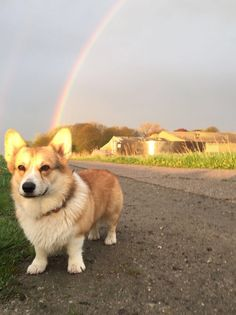 Mr. Speebunkles at the end of the rainbow