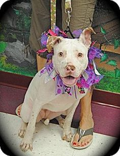 Lively, Lavish Layla <3 WOW - What a Gal!