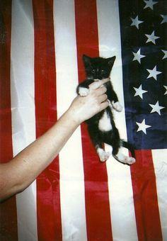 CatsinAmerica.