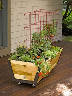 Rolling planter box with tomato cages - great small space patio or balcony idea