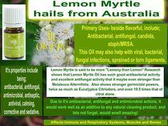 Lemon Myrtle www.youngliving.org/nlfinck