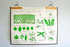 Vintage education General Biology Chart. Double sided. Published by Denoyer-Geppert Co. Chicago. 1964. LegalMissSunshine/Etst=y