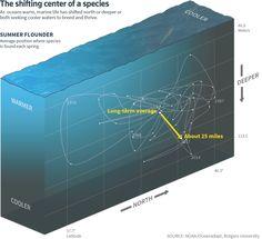 Ocean Shock: Fish fl