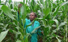 【ePrayer 2013年1月24日   有機耕種運動可提升糧食保障】 二十世紀五、六十年代,消費者意識到農業化品的使用愈來愈多,促使現代有機耕種運動萌芽。隨着世界人口不斷上升,氣候變化影響全球土質,糧食生產的持續性更顯重要。祈望有機種植得以普及,減低生產成本,讓更多低收入的消費者能夠受惠。