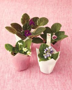 See the African Violet Plant Tags Clip Art in our Mother's Day Clip Art and Templates gallery