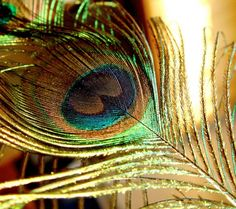 Beautiful plumage of a peacock. Feather Vector, Feather Dream Catcher, Dream Catchers, Samsung Galaxy Wallpaper, Bird, Photography, Beautiful, Peacocks, Design
