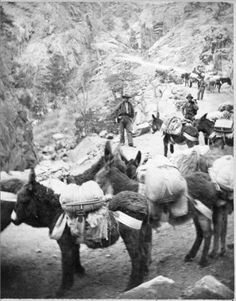 "1870-1890. Pack burros pose on Ute Pass, in Teller County, Colorado; men on horses are in the background. Penciled on alternate stereocard: ""2880 Burro pack train on the way to Leadville, Col USA.;"" on back: ""photographed and published by Kilburn Brothers - Littleton, N. H.""; Title printed on scanned stereocard.; R7100222661. Creator: Chamberlain, W. G. (William Gunnison), 1815-1910.     Courtesy: Western History/Genealogy Department, Denver Public Library, Denver, Colorado (USA)."