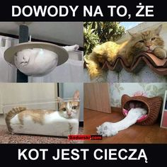 Funny Mems, Funny Cat Memes, Wtf Funny, Bts Memes, Hilarious, Weekend Humor, Best Memes Ever, Aesthetic Memes, Nyan Cat