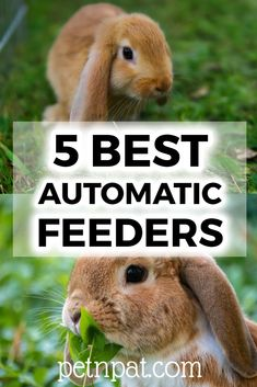 5 Best Automatic Rabbit Feeders And Why You Need One #rabbit #bunny #pets #animals