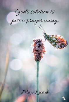 ❤ God's solution is just a prayer away. Max Lucado #maxlucado #prayer #God'ssolution