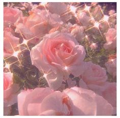Pink Tumblr Aesthetic, Baby Pink Aesthetic, Peach Aesthetic, Aesthetic Colors, Flower Aesthetic, Aesthetic Images, Aesthetic Collage, Aesthetic Pastel Wallpaper, Aesthetic Backgrounds