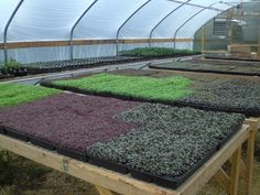 Process for Growing Microgreens - Back Yard Riches