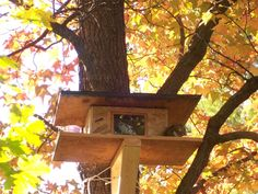 make a squirrel house | one up, I went out and saw a squirrel that looked like my red squirrel ...