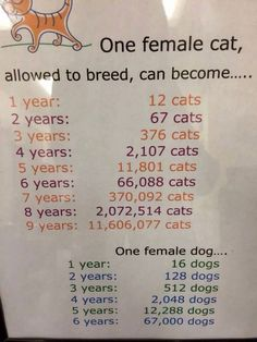 Why Spay or Neuter Your Pets?