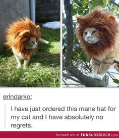 I want this for Tuffy- where can I find one?!?