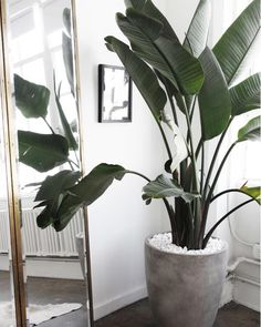 All of these indoor plants are easy to keep alive and perfect for small spaces. #IndoorPlants #Plants Indoor Plants, Indoor Gardening, Beautiful Homes, Decorations, Exterior, House Plants, House Design, Tropical, Nice Houses