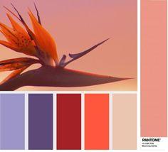 PANTONE 15-1520 Blooming Dahlia - Цветущий георгин