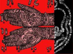 "Deborah Cornell  Repercussion               Digital Print and Litho                   15 x 20"""