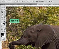 Morphing Tutorial using Photoshop! - AntsMagazine