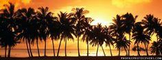 Sunset Palms