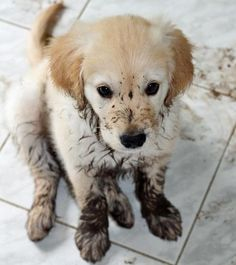 Muddy puppy paws