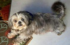 Lilly - my 3rd Fluffy Dog foster