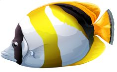 Chaetodon Butterfly Fish PNG Clipart