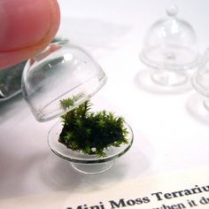 OMG - tiny moss terrariums