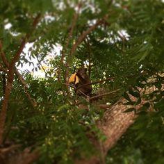 #원숭이 손님 We had a #monkey visitor At our #villa @fslangkawi  Jane gave bananas for the monkey. Hope this action won't  bring his whole gang  to our private villa #17 . #여행스타그램 #말레이시아 #랑카위  #포시즌스 #리조트 #langkawi  #fourseasons #resort #travel  #fourseasonslangkawi  #vacation #exotic #destination