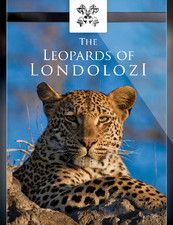 The Leopards of Londolozi, Londolozi.