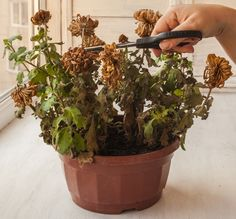 Interior Plants, Diy Home Crafts, Plant Hanger, Indoor Plants, Bonsai, Garden Design, Planter Pots, Home And Garden, Backyard