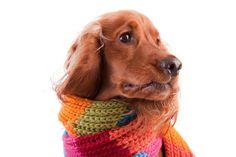 La gripe en el cachorro
