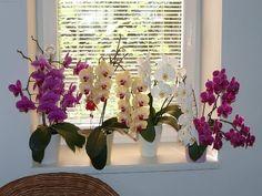 Орхидеи в воде под светодиодными лампами.Часть 1. (ЭКСПЕРИМЕНТ) Full water culture) - YouTube