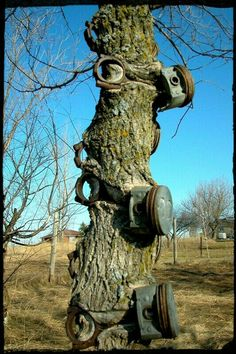 Post a random pic Thread - Page 15721 - Yellow Bullet Forums Weird Trees, Tree Carving, Unique Trees, Old Trees, Nature Tree, Growing Tree, Tree Art, Abandoned Places, Amazing Nature
